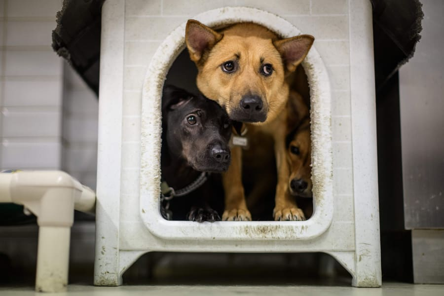 03 Coronavirus people adopting pets