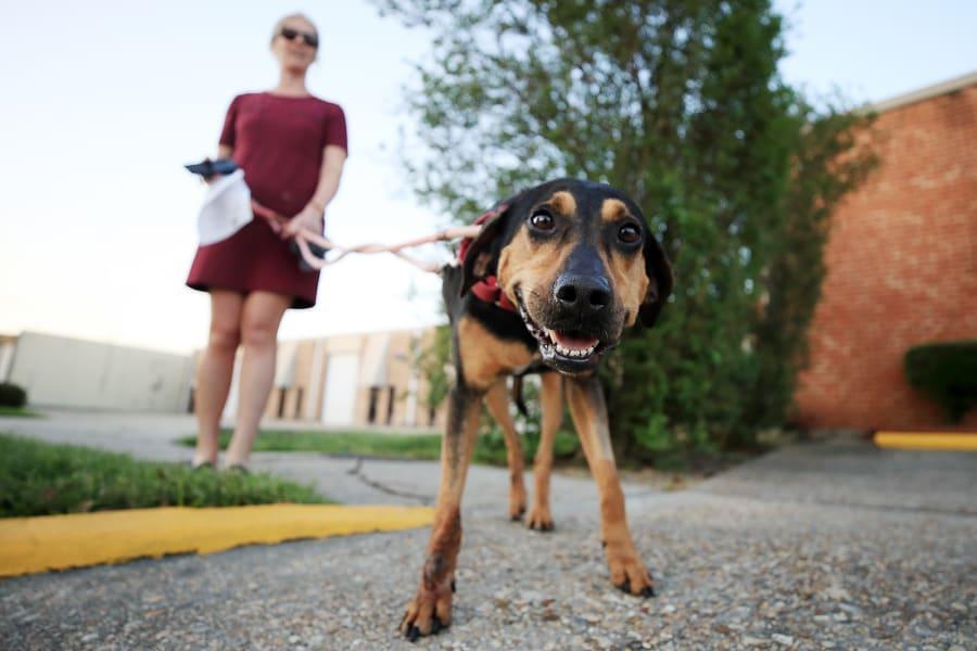 07 Coronavirus people adopting pets