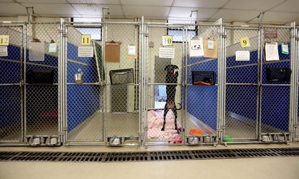09 Coronavirus people adopting pets
