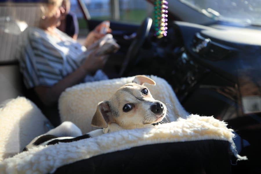 10 Coronavirus people adopting pets