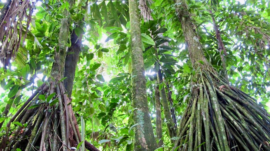 Costa Rica forest pedro