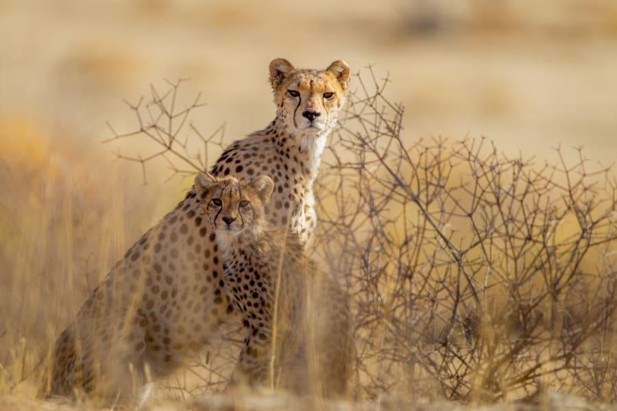 07 Kalahari Desert Wildlife