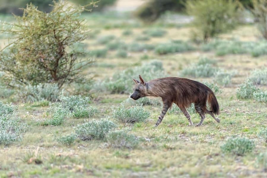 09 Kalahari Desert Wildlife