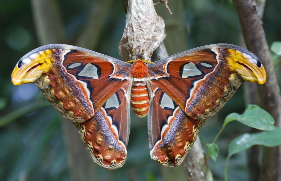 03 weird invertebrates atlas moth
