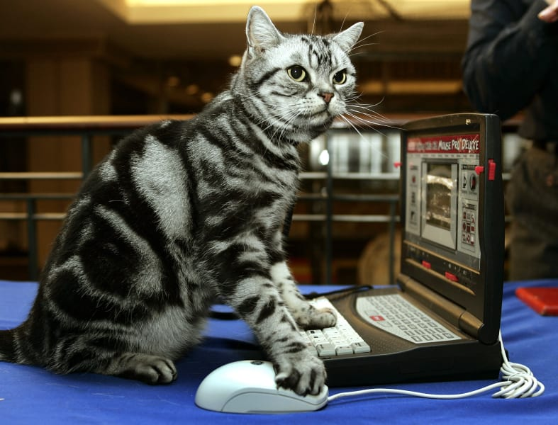 carpal tunnel cat computer mouse