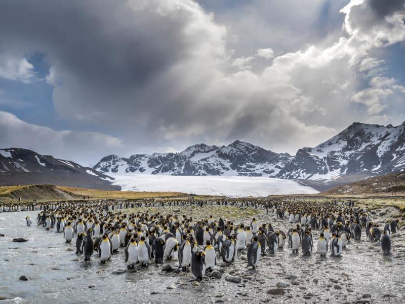 13 penguins south georgia