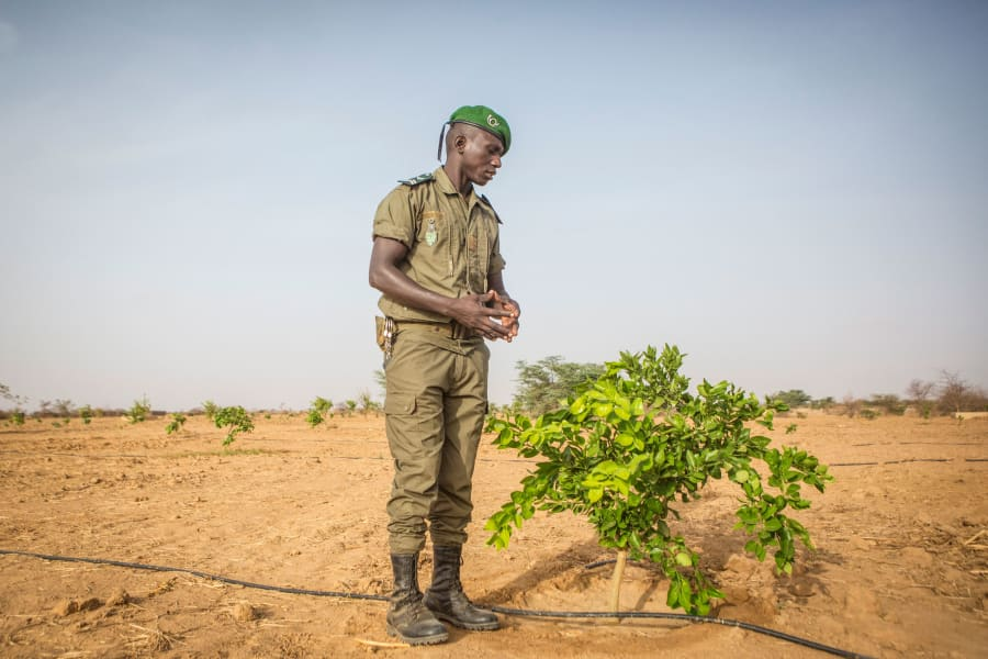 RESTRICTED 08 great green wall senegal 2019