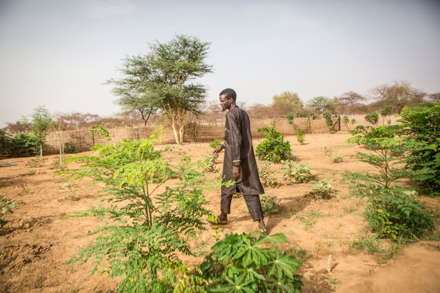 RESTRICTED 13 great green wall senegal 2019