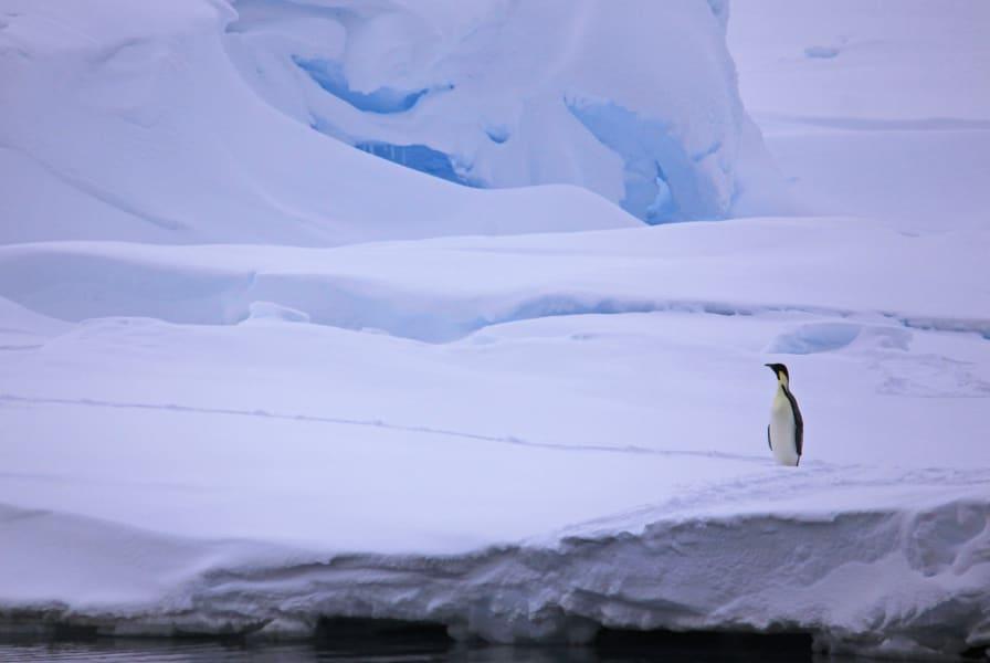 03 seals scientists antarctica c2e RESTRICTED