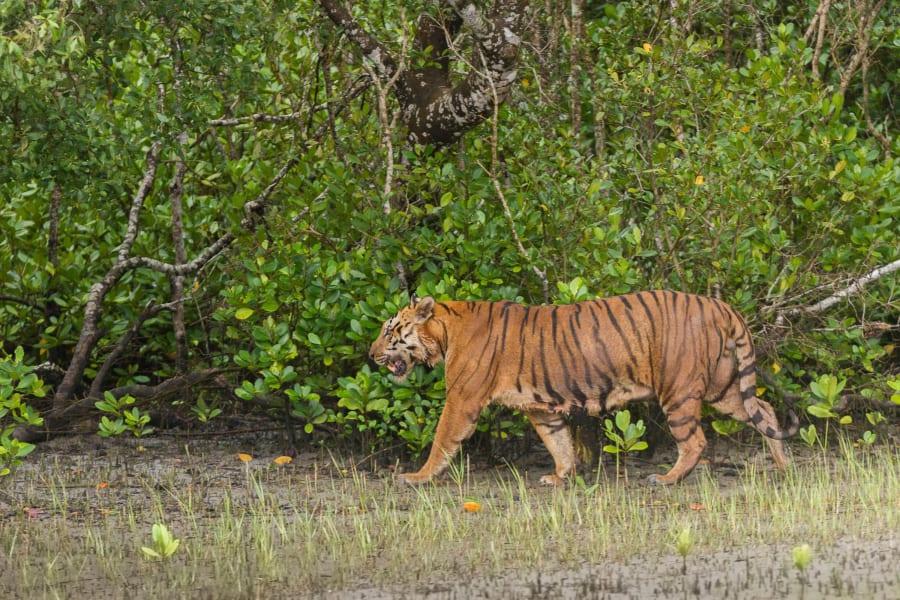 01 human wildlife conflict RESTRICTED BENGAL