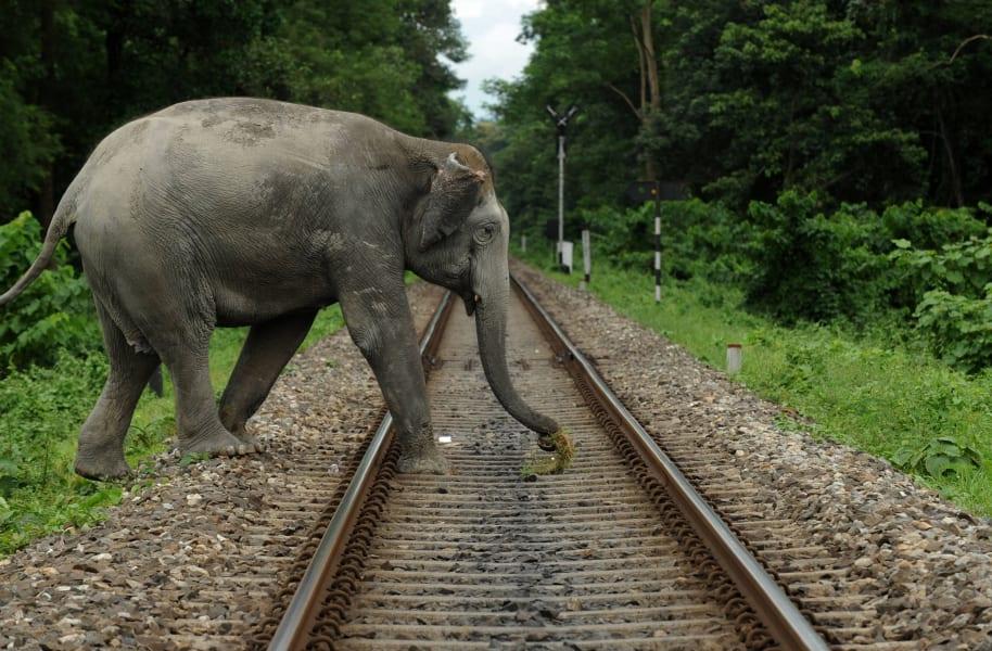03 human wildlife conflict ELEPHANT