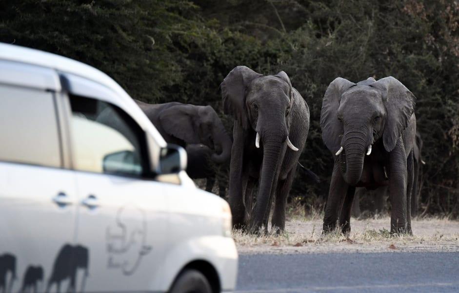 06 human wildlife conflict ELEPHANT