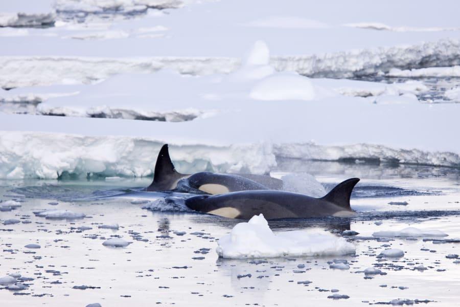 08 seals scientists antarctica c2e RESTRICTED