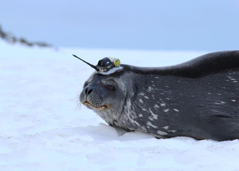 01a seals scientists antarctica c2e