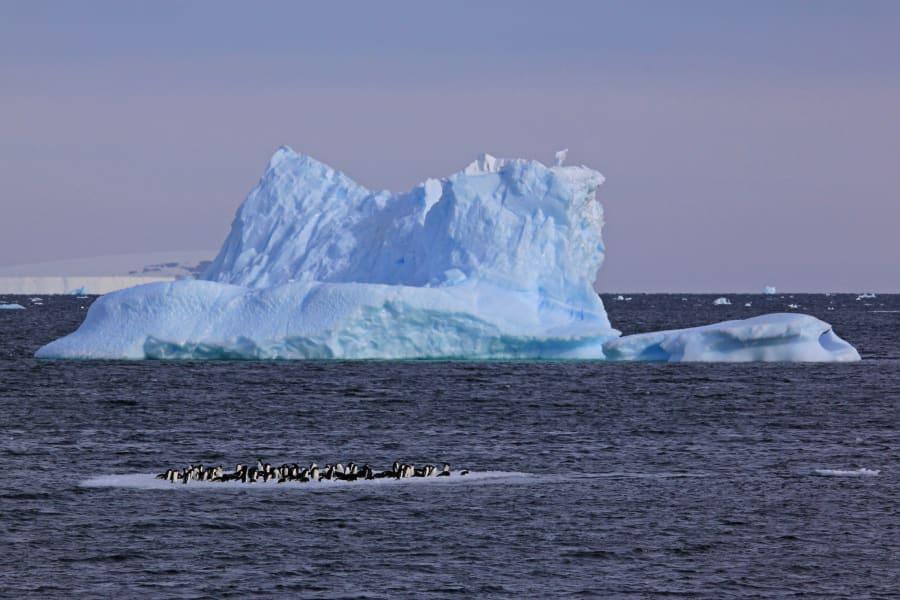 02a seals scientists antarctica c2e