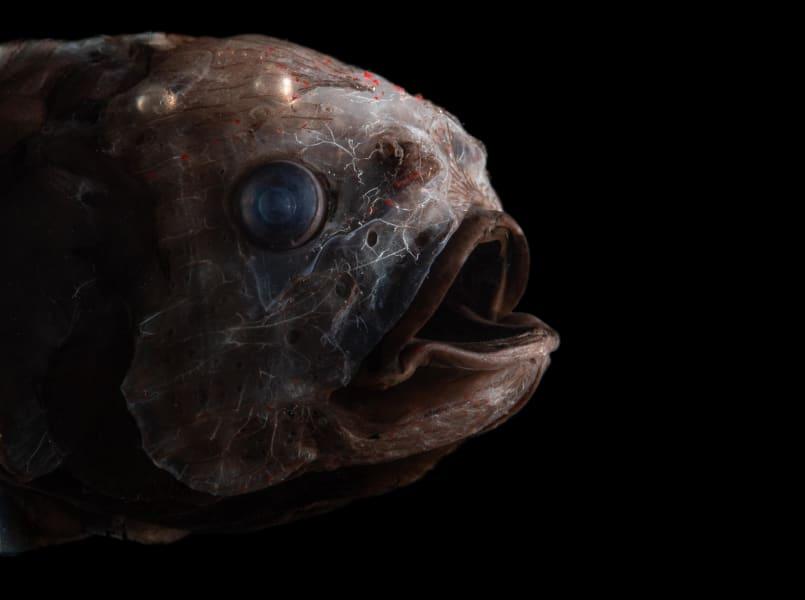 03 ocean twilight zone creatures RESTRICTED