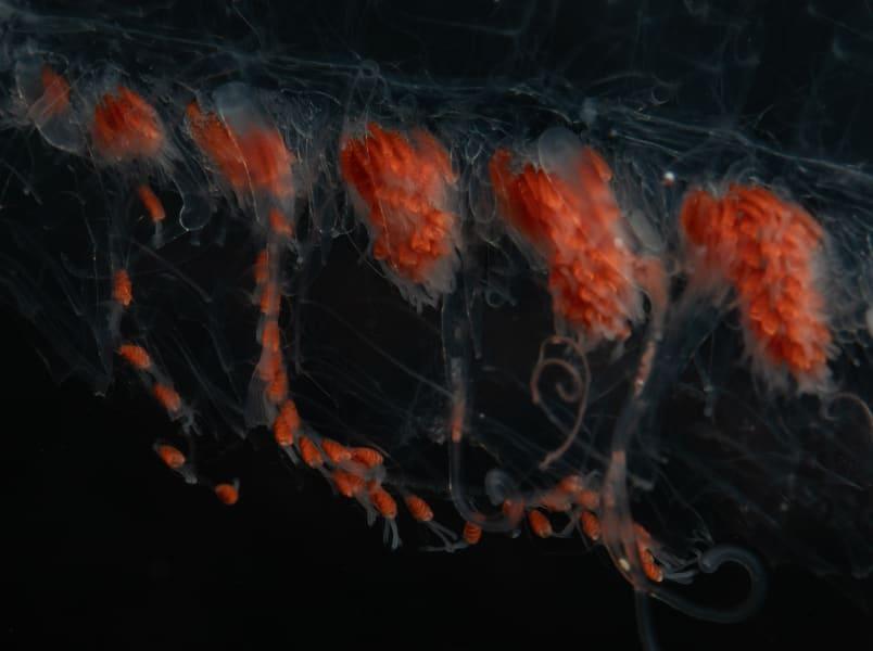 14 ocean twilight zone creatures RESTRICTED