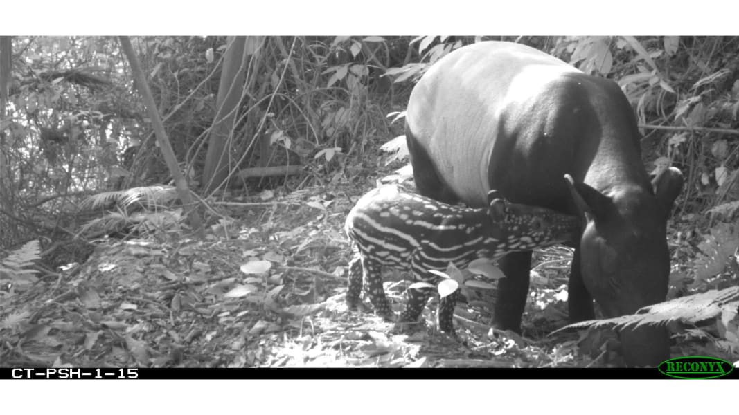 RESTRICTED 03 camera trap study