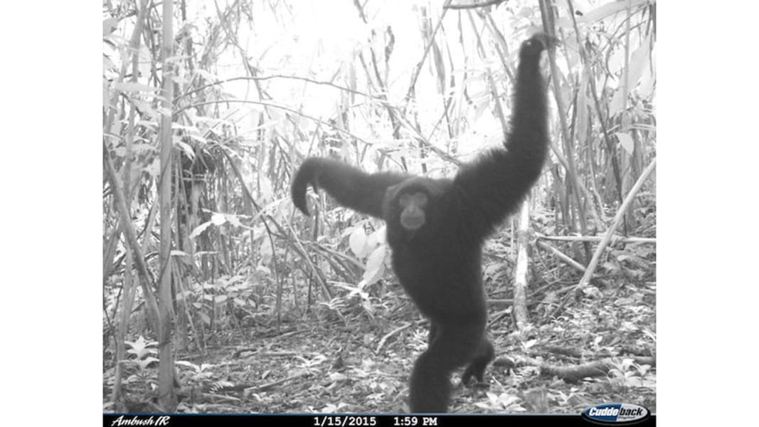 RESTRICTED 05 camera trap study