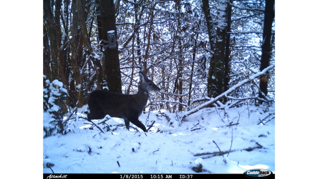 RESTRICTED 06 camera trap study