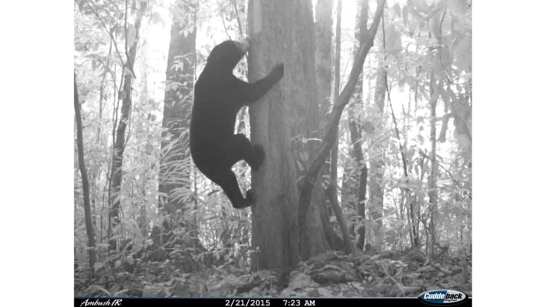 RESTRICTED 09 camera trap study