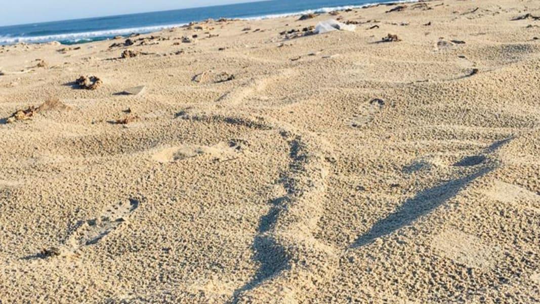 golden mole burrow 2