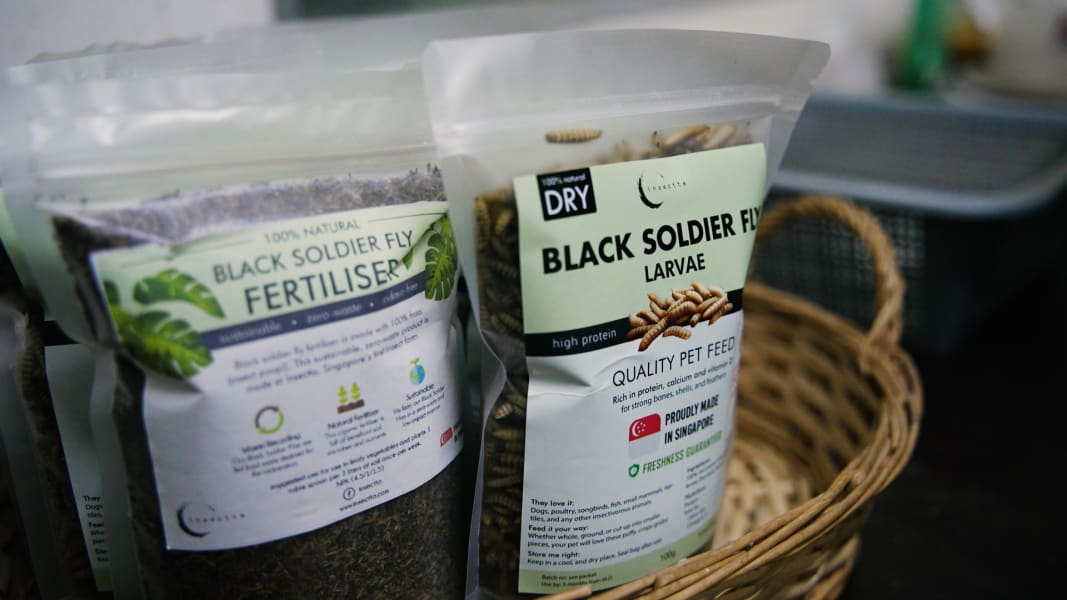 Insectta black soldier fly larvae products