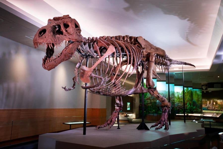 Sue the t rex field museum