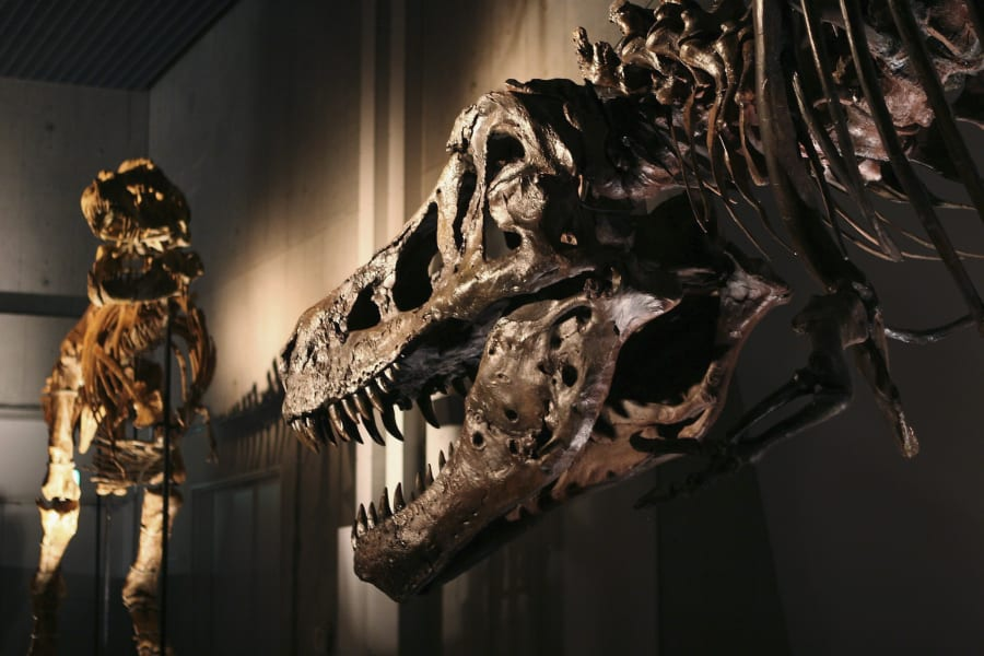 sue the t rex jaw