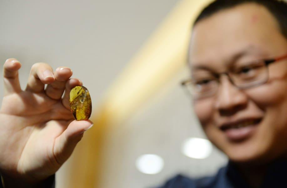 Dr Xing Lida dinosaur amber FILE 2016
