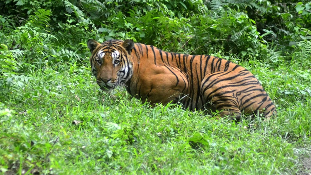 Gujarat to have Tiger and Leopard safaris: Ganpat Vasava