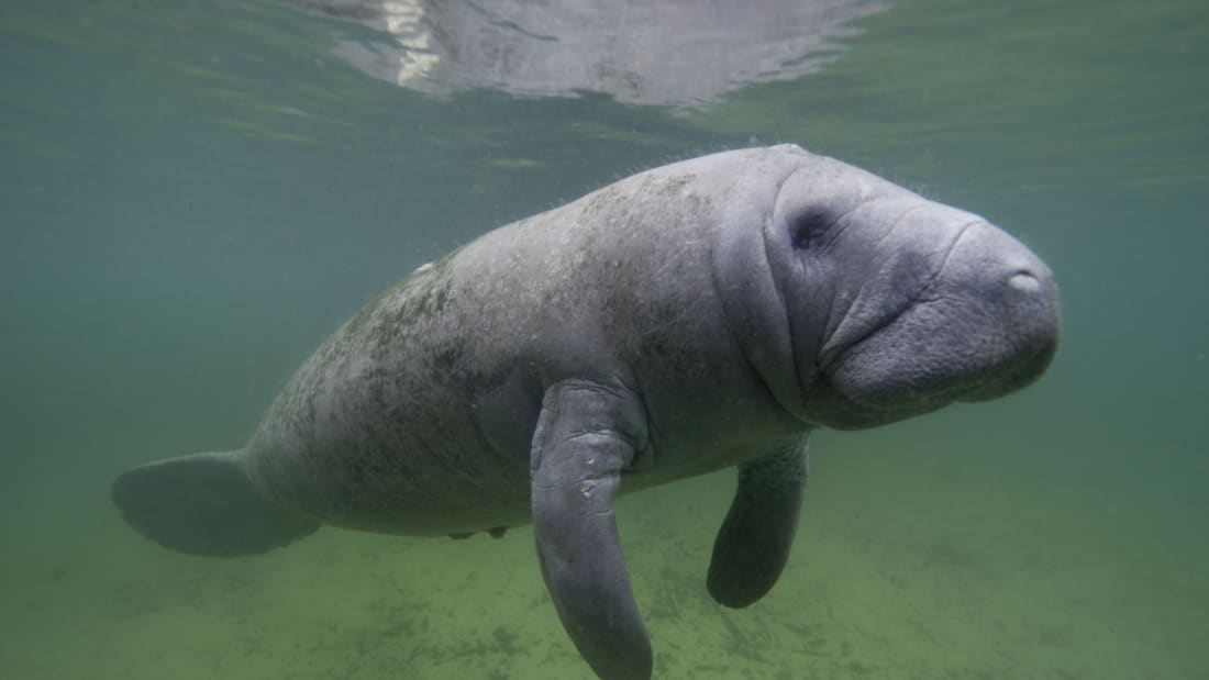 lonely planet florida manatee