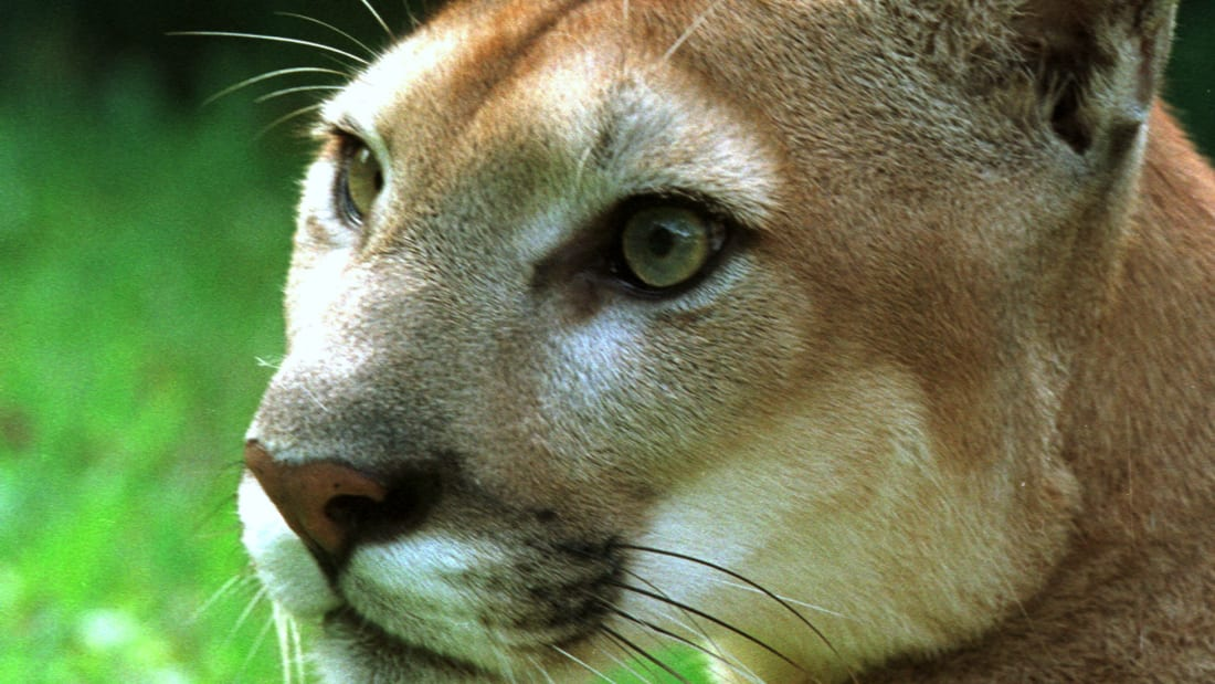 Best USA wildlife safaris