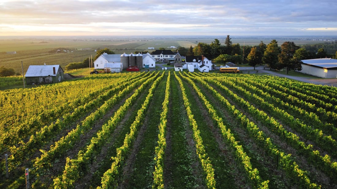 An overview shows the Coteau Rougemont winery, near Montreal.