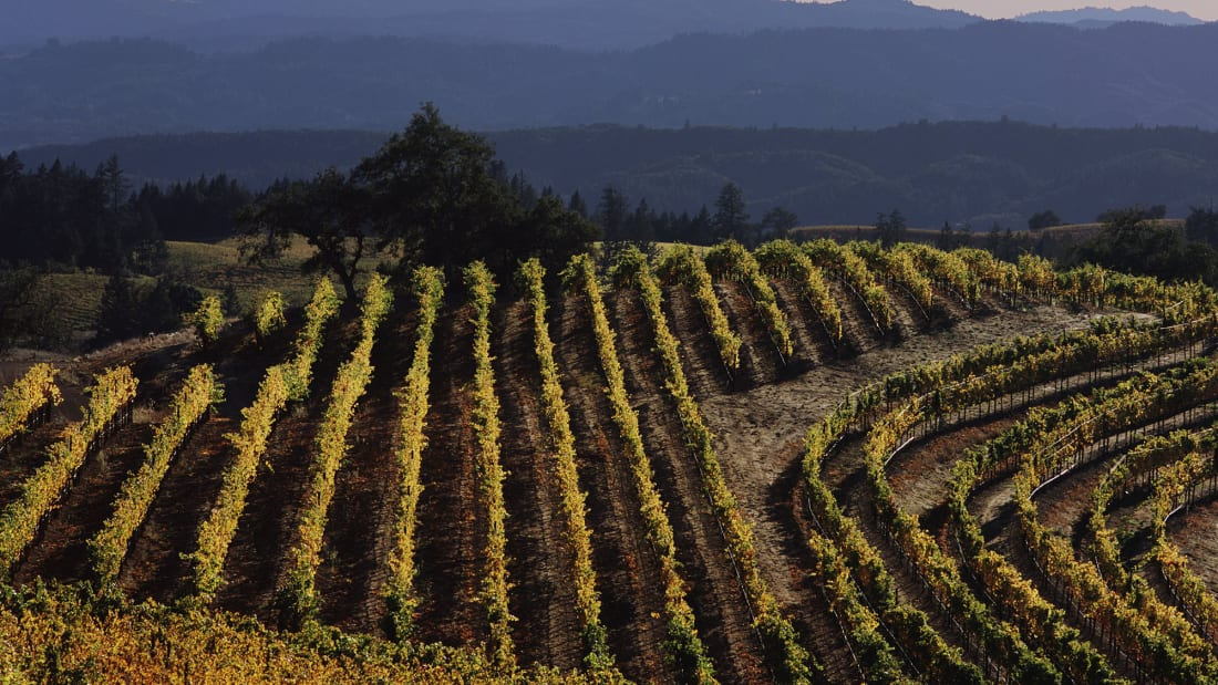 A winery will pay you ,000 a month to work and live rent-free in Sonoma