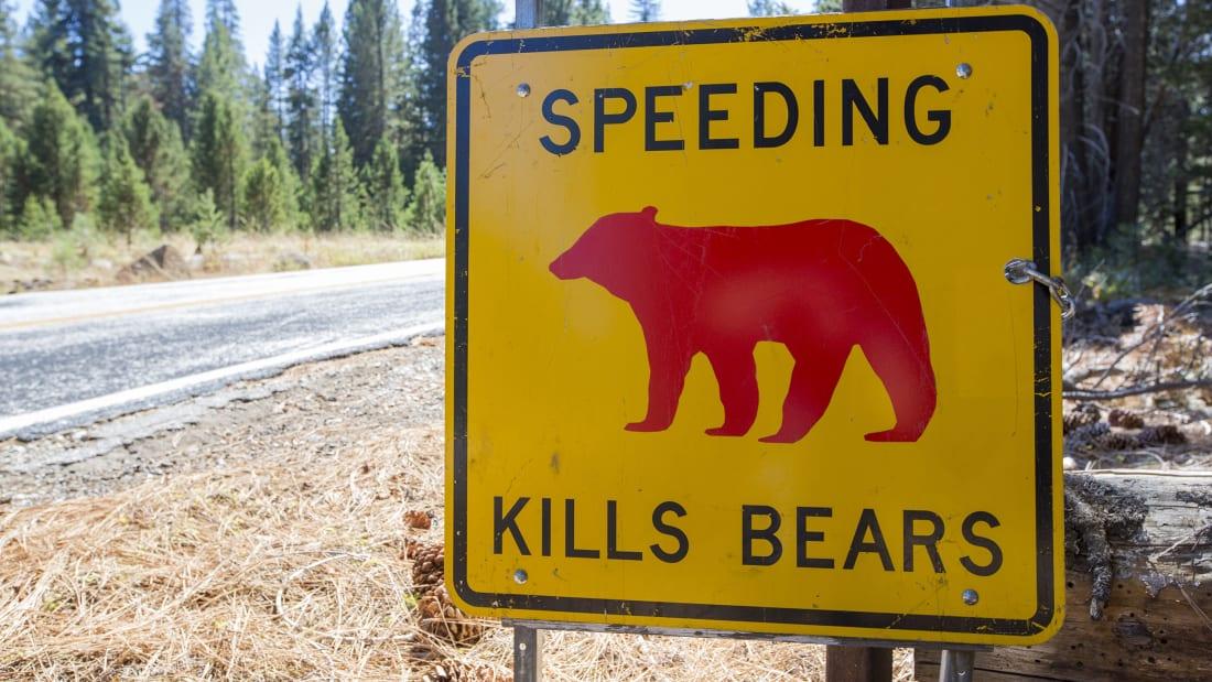 """Un semn galben """"Speed Kills Bears"""" în Parcul Național Yosemite."""
