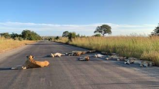 O Parque Nacional Kruger está atualmente fechado como parte do bloqueio nacional da África do Sul.