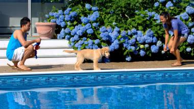 12 Of The World S Dog Friendliest Hotels Cnn Travel