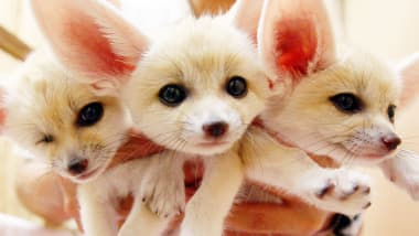Are These The World S Cutest Creatures Cnn Travel