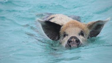 Unusual snorkeling spots: Salmon, pigs just the start | CNN