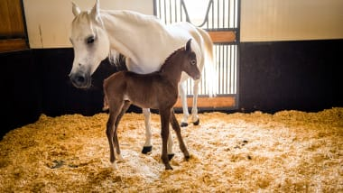 Qatar's Al Shaqab: A five-star resort for horses in Doha