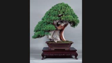 Peachy Bonsai Masters Share Their Ancient Secrets Cnn Style Wiring Cloud Oideiuggs Outletorg