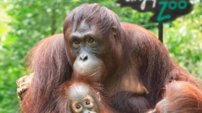 And the world's best zoo is     | CNN Travel