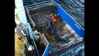 cape cod shark sightings map 2020