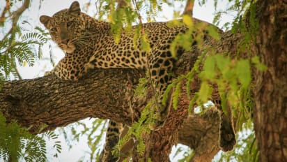 zambia 5 reasons to visit now cnn travel