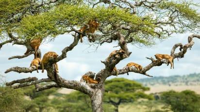 africa on safari photographer tips cnn travel