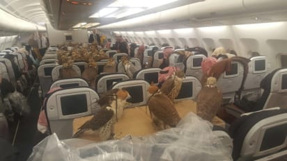 Falcons on a plane: First class treatment for birds of prey | CNN Travel