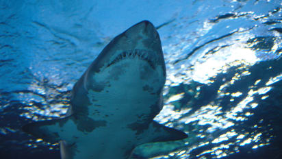 How to survive a shark attack   CNN Travel