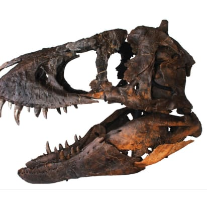 For sale: A $1 8 million T-rex skull - CNN Style