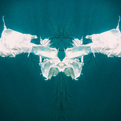 Freediving photographer makes unsettling images of polluted